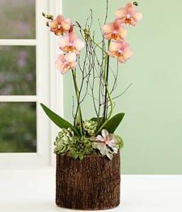 Proflowers Orchid & Succulents